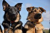 Dogs-Activity | Hundeschule bei Stade